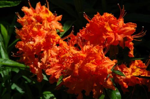 Orange_flower_at_yellow_house